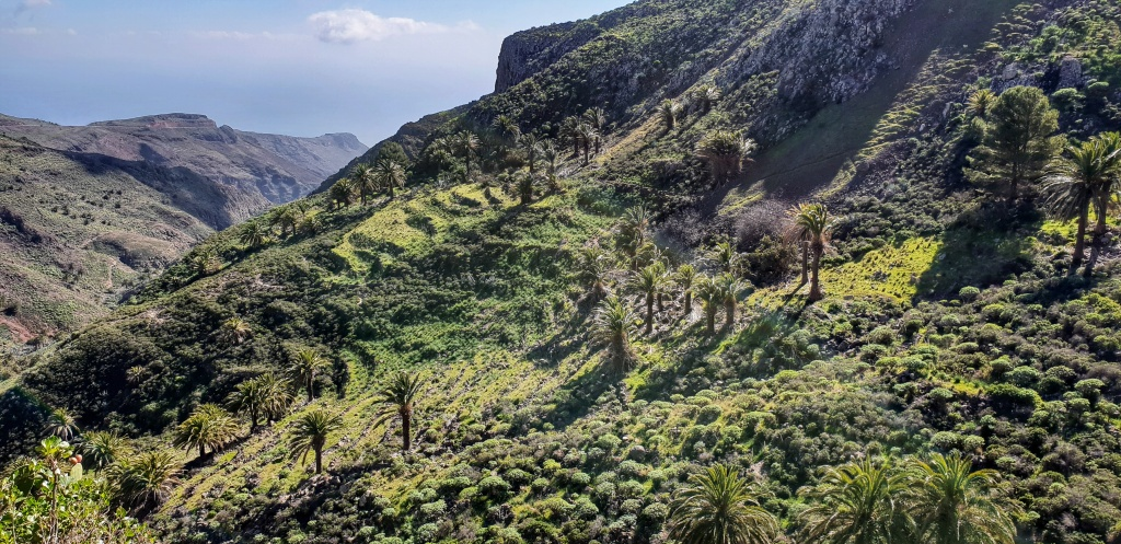 Green landscape with palm trees on La Gomera