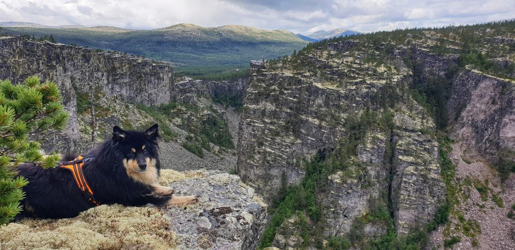 A dog on the edge of Jøtulhugget canyon in Alvdal