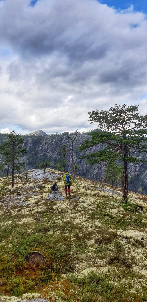 Man and dog walking in open forest towards the Jutulhogget Canyon in Østerdalen in Norway