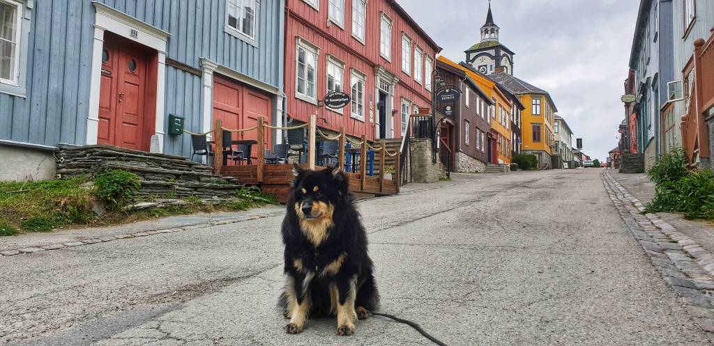 A dog sitting in a colourful street in Røros with the church's clock tower in the background.